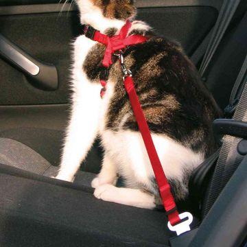 Trixie Bilsele Katt Röd Bilsele för djur, 1 st