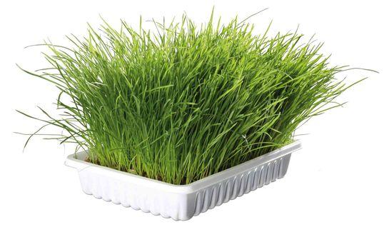 Trixie Mjukt kattgräs Odlingslåda Kattgräsfrön och odlingslåda, 100 g